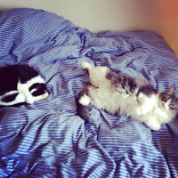 Two adorable cats need to be re-homed (together or separate)Free