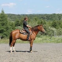 Cheval quarter horse non enregistre.