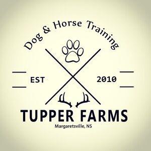 Tupper Farms Dog Training