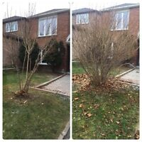 Shrub and Small Tree Removal and Prune/Overgrown Grass Cut