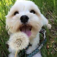 Dog Boarding / Sitting and Dog Walking in Evanston NW