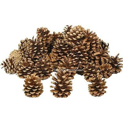 1kg box Pine Cones 5-8cm (approx 55) professional quality natural fir pinecones