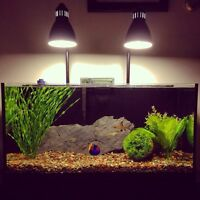 30 Gallon Fish Tank / Aquarium