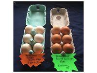 Fresh free range eggs for sale