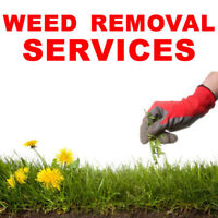 WEED REMOVAL SERVICE