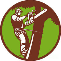 Certified Arborist - Best prices in town!