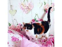 Emma house cat