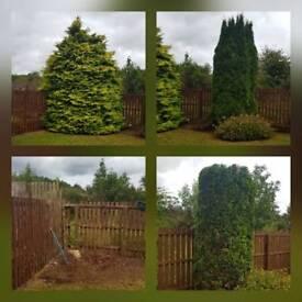 Local tree work