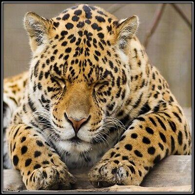 30 Custom Sleeping Leopard Personalized Address Labels