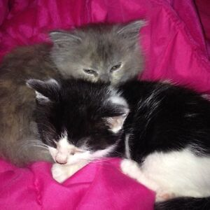Kittens Free To Good Home