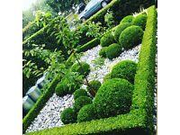 Gardener in Knightsbridge