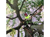 Tree Professionals