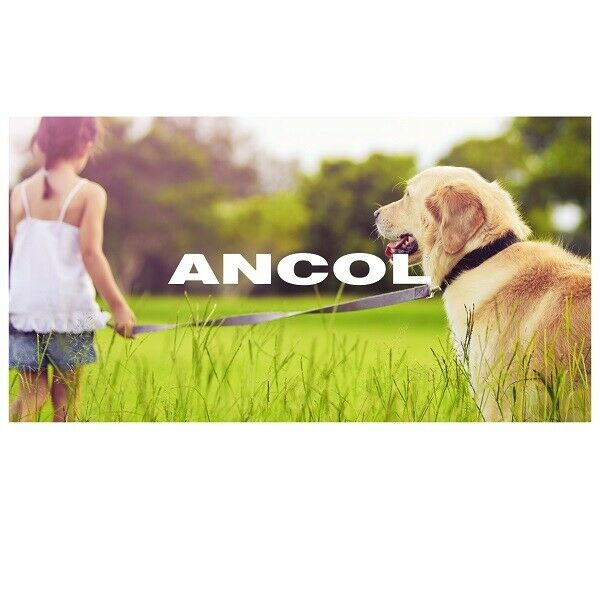 ANCOL NYLON DOG LEAD with PADDED HANDLE Choice of Black Blue Red & Pink NEW VIVA