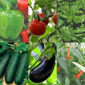 Limited 🌱 Veg/Herb Garden Plants 🌱