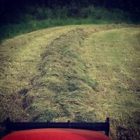 Round Hay, Haylage and Silage Bales. $80