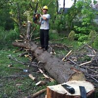 ARBOR TREE REMOVAL /LANDSCAPING 647-761-3412