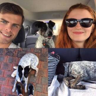 Reliable Pet and House sitters