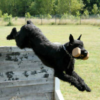 All Breed Schutzhund Club