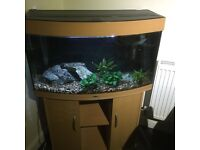 Tropical fish tank complete set up