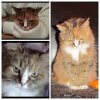 Lost 25 year old cat- Zoe