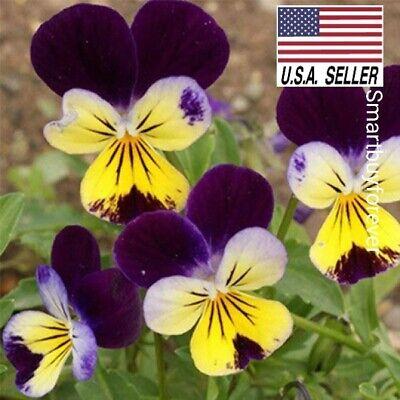 1,000+ Johnny Jump-Up Flower Seeds Perennial Purple Blooms Pink !