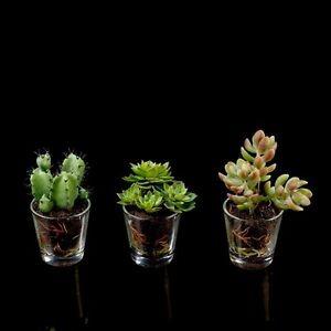 piante grasse mini pianta grassa piante artificiali pianta
