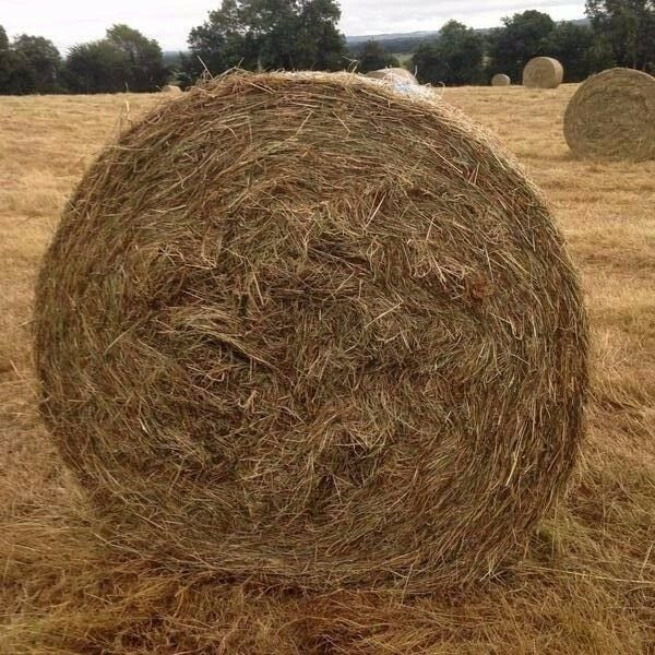 Free Hay