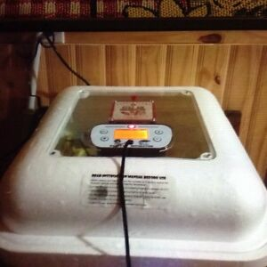 Still air egg incubater for sale
