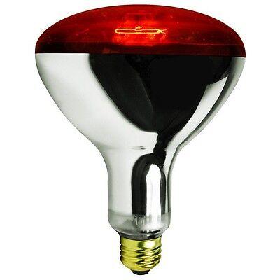 250 Watt Red Brooder Heat Lamp Bulb Chicken Coop Hen House Baby Chick 250w