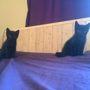 10 week old male & female kittens