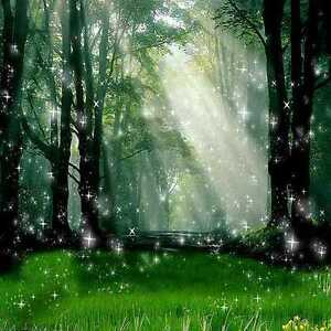 Forest Backdrop Background Material Ebay