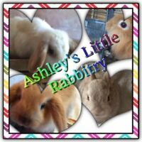 Rabbits/Bunnies ALR has Rabbits Available!