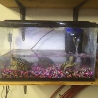 3 red eared slider turtles, tank and filter plus more