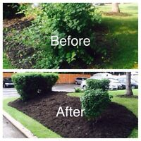 Hedge & shrub trimming/pruning services (price won't be beat)