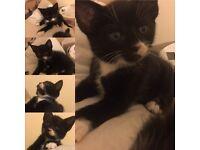 Litlle kittens