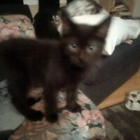 2 month old kittens for loving home