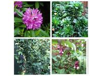 Large Trees & Plants - these are 3x more in a Garden Centre - See Ad for Prices or £38 for the lot
