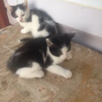 2 chaton a donner