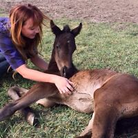 Want to work with horses? Join our team!