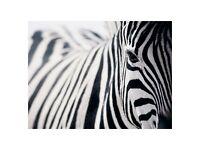 Ikea zebra picture
