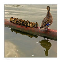 "Struggling to keep ""Your Ducks in a Row""?"
