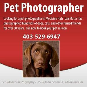 Pet Photography Medicine Hat