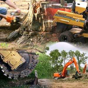 Tree removal. Free wood. Arborist reports.