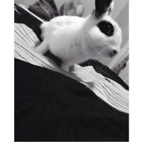 Female rabbit FREE to a good home!