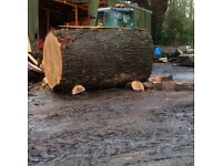 Wanted large / local huge Felled Tree Trunks oak ash beech cedar chestnut