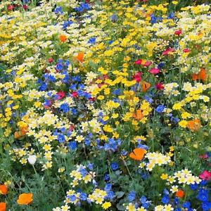 400 annuel vivace fleurs sauvages m lange graines multicolore fleurs livraison gratuite ebay. Black Bedroom Furniture Sets. Home Design Ideas