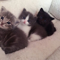 New Born Kittens Looking For New Homes