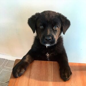 Pup for rehoming