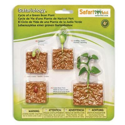 Life Cycle Of A Green Bean Plant Figures Safari Ltd NEW Toys Educational Toys - Lifecycle Of A Plant