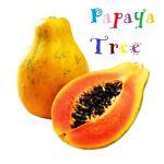 Papaya Tree Australia